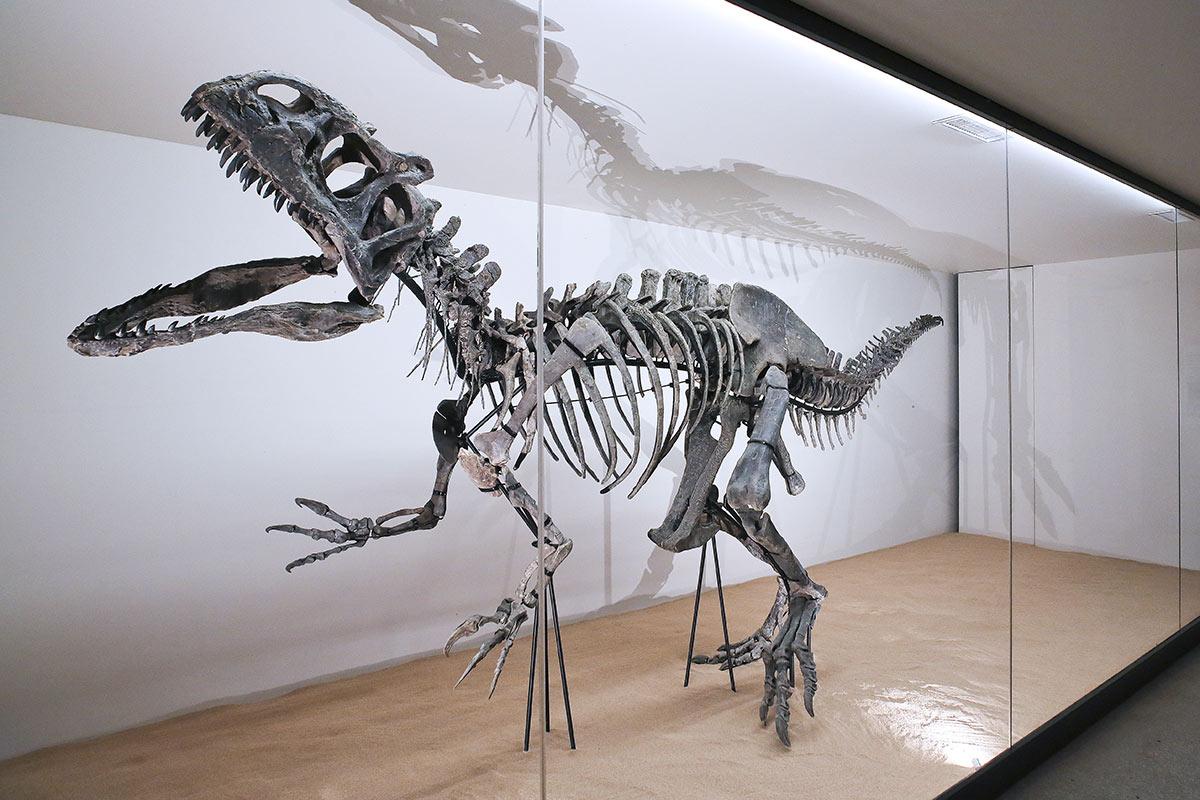 Jardins de Marqueyssac. Un dinosaure aux Jardins. Squelette Allosaure